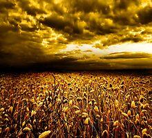Golden Field by PhotoDream Art