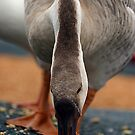 The Goose by David  Postgate