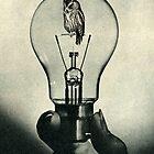 The Night Owl by Sammy  Slabbinck