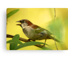 House Sparrow - Beauty in the Commonplace Canvas Print