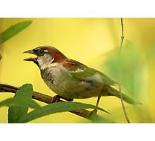 House Sparrow - Beauty in the Commonplace Photographic Print