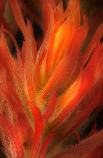 Dancing Flames by Steve  Taylor