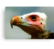 Ethel the Vulture 1 Canvas Print