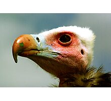 Ethel the Vulture 1 Photographic Print