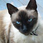 Ole Blue Eyes by Sheila Simpson
