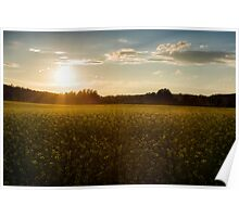 Sunset on a canola field Poster