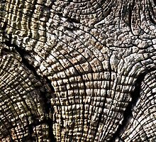 Tree Trunk by Ludwig Wagner