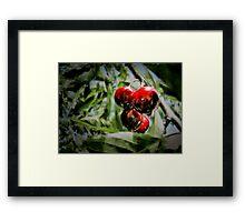 Some cherries Framed Print