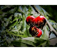 Some cherries Photographic Print