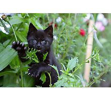 Me iz wild Panther - Me Eatz U! Photographic Print