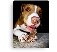 A Dog And His Bone Canvas Print