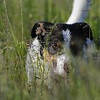 Wet Dog by Nic Relton