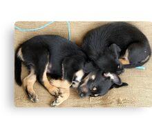 Kelpie Puppies Canvas Print
