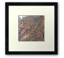 Leaves Up There Framed Print