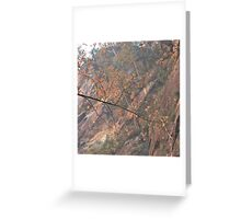 Leaves Up There Greeting Card