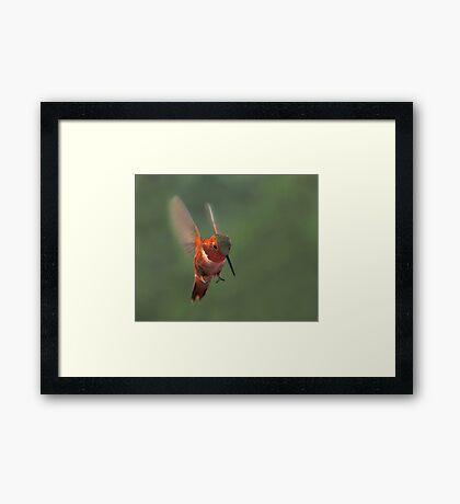 Thrill of the Hunt Framed Print