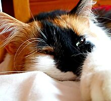 Sleeping cat by Asmithh