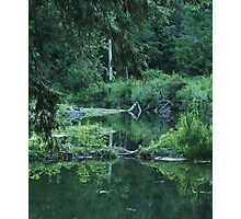 Naturally Abstract Reflections Photographic Print