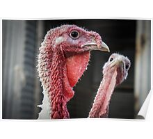 Cool Turkeys Poster