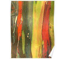 Striped bark Poster