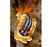 Nudi Night Photographic Print