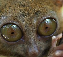 Tarsier by yardbird