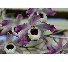 Cooktown Orchids? Photographic Print