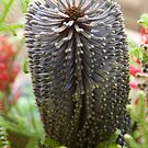 Banksia Floral Arangement by Chris Cohen