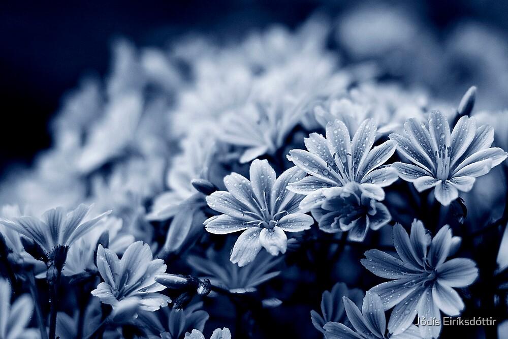 Cold Blue by Jódís Eiríksdóttir