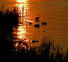 Birds at Sunset by Mary  Lane