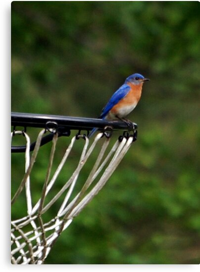 Hoops Anyone? by ArkansasLisa