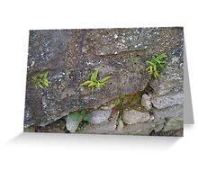 Ferns - they grow on you Greeting Card