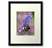 The Bumble Bee Framed Print