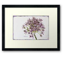 Allium Framed Print