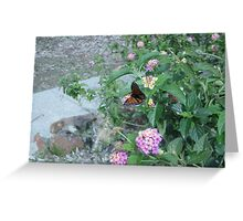 Lantana butterfly Greeting Card