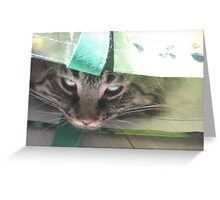 Mac is a grocery item again Greeting Card