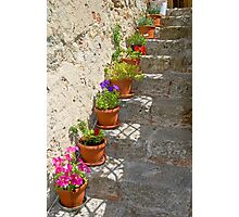 Flower pots on stone steps Photographic Print