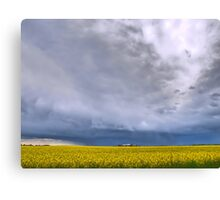 Canola on Stormy Plain Canvas Print