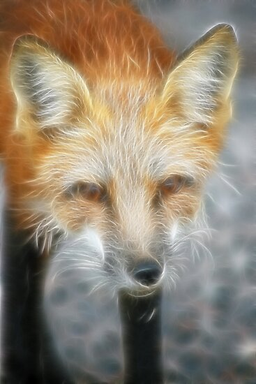 Sly Fox by Vickie Emms