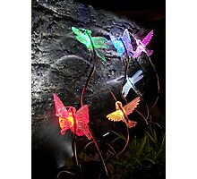 Sprinkle Lights in a Grotto Display Photographic Print