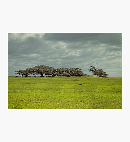 Green horizon Photographic Print