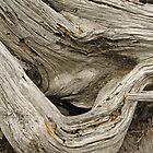 Driftwood  •  Mendocino Coast by Richard  Leon