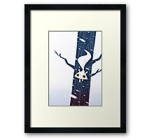 White Squirrel Framed Print