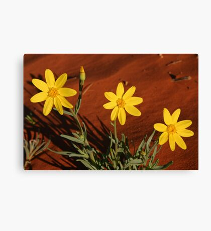 Annual Yellowtop Canvas Print