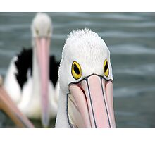 Pelican Eyes Photographic Print