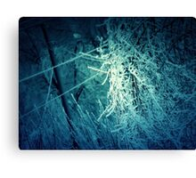 Winter trees 2 Canvas Print