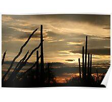 Awesome summer desert sunset Poster