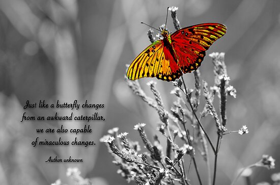 Miraculous Changes . . . by Bonnie T.  Barry