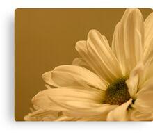 Daisy-Side Up Canvas Print
