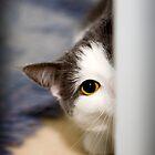 I see you by Stephanie Johnson